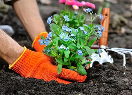 Création de jardin et plantation d'espaces verts à Compiègne